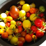 Homegrown tomatoes, Colorado Springs, summer 2010