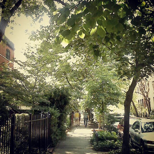 residential street, lincoln park, chicago