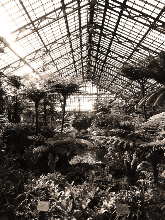 Garfield Park Conservatory, Chicago